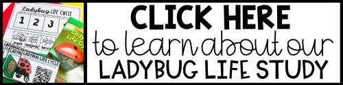 Ladybug Life Cycle button