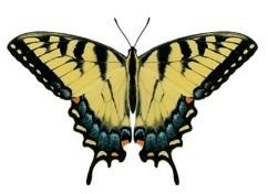 Eastern Tiger Swallowtail Butterfly Small Circle Necklace