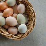Suzie's Eggs