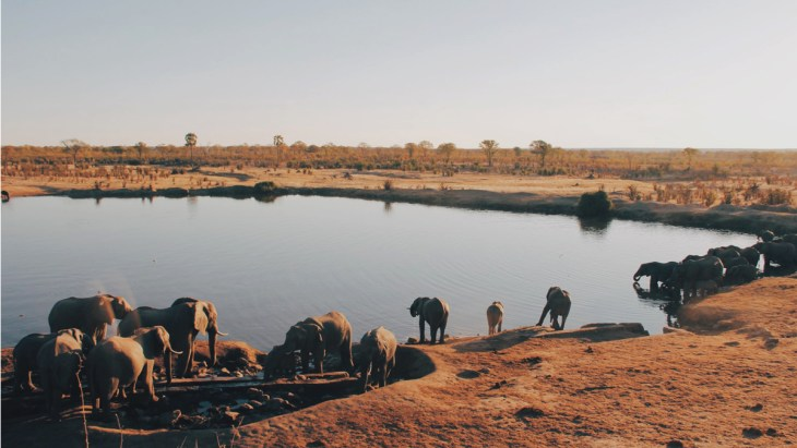 A herd of elephant drinking water from lake at Hwange National Park. Image Courtesy: Christine Donaldson for Unsplash
