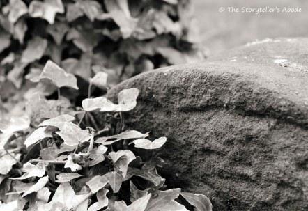 ivy stone