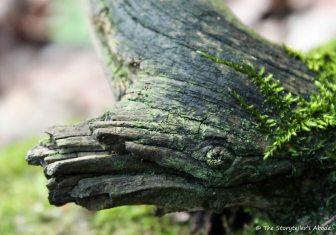 Strange Mossy Log