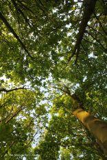 38 canopy