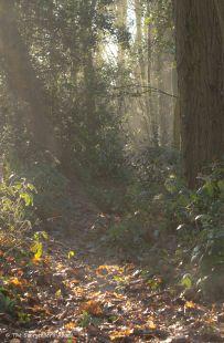misty-woodland-view-2