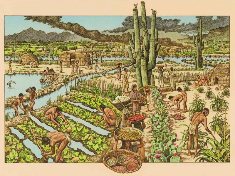 Fields and canals in Snaketown, Arizona