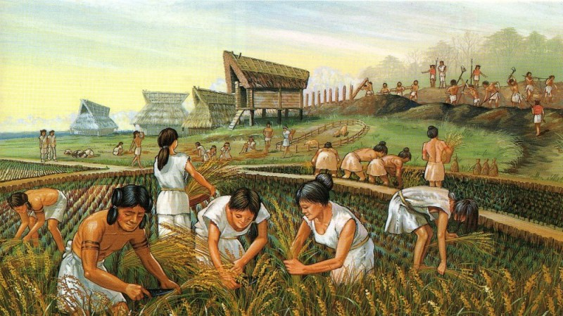 Neolithic rice farming