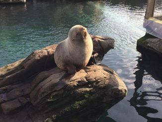 living coasts in torquay