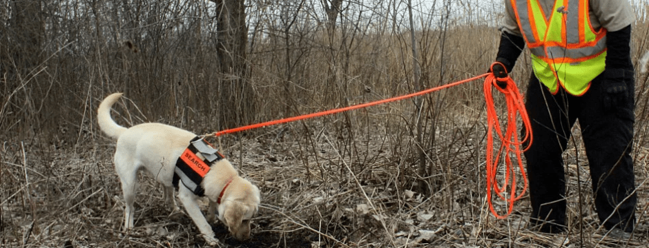 Natural gas pipeline-inspecting dog