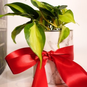 DIY Planter Gift Featured