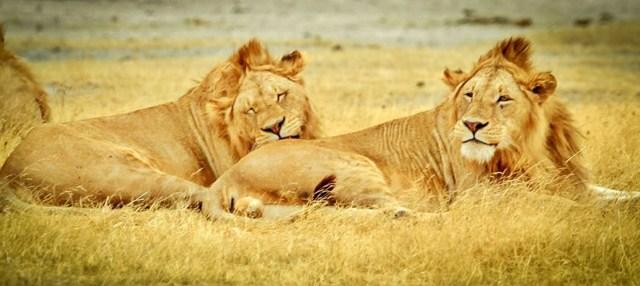 tanzania-serengeti-national-park.jpg