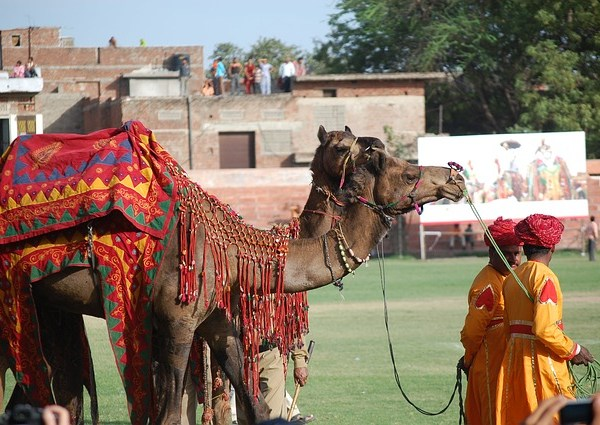 Top 4 Experiences at the Pink City: A Place of Palaces, Jaipur
