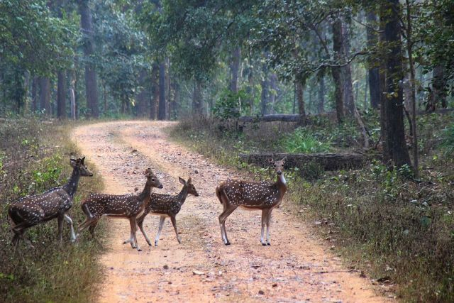 Jungle_Crossing