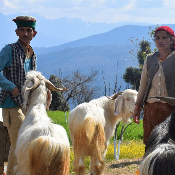 Closer to the Sky- A Trip to Karsog Valley, Himachal Pradesh