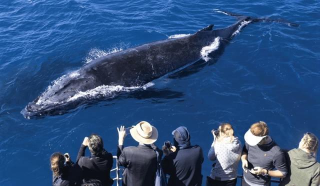 whale watching at Maui, Hawaii