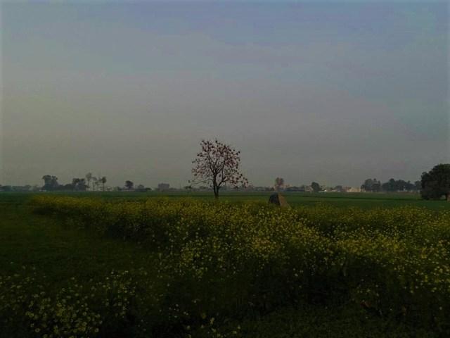 Singhu, Delhi