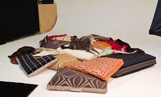 photo-studio-rental-dog-beds