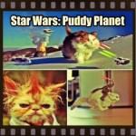 STAR WARS VII SET ON PLANET OF KITTENS