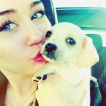 MILEY CYRUS TO KILL A PUPPY A WEEK 'FOR LAUGHS'