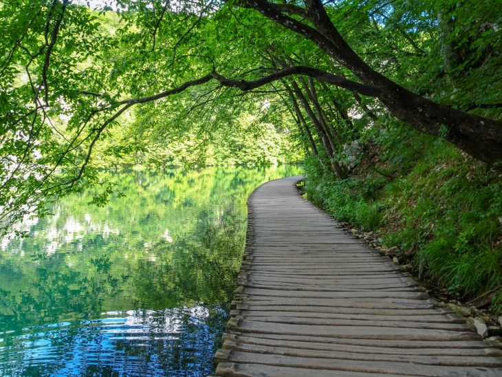 Wooden path alongside a lake with tress overhead.