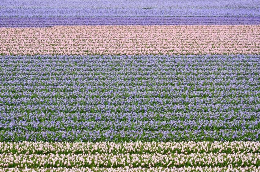 Fioritura dei tulipani in Olanda. Visit Keukenhof 02 - thestylelovers.com