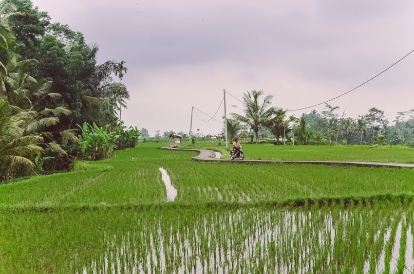 Ubud-yoga-Bali-paesaggi-risaie-rice-fields-thestylelovers