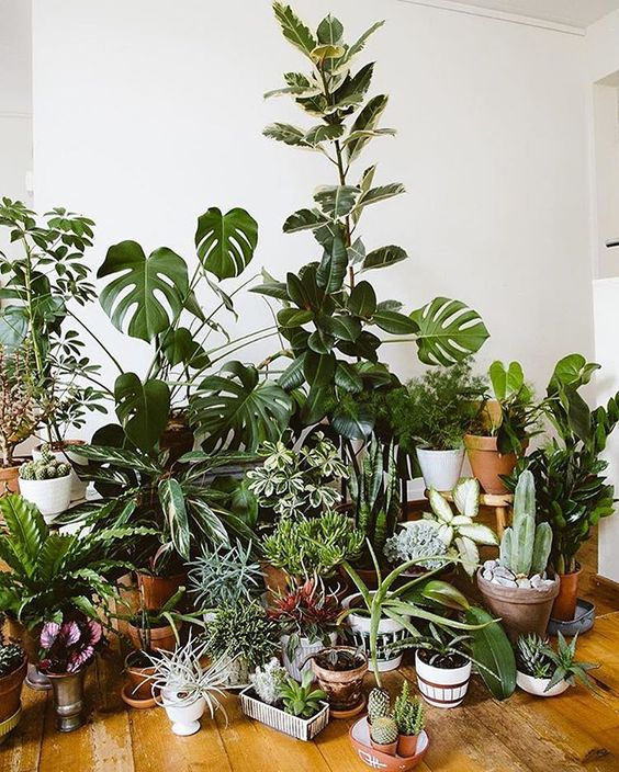 modern adult collections-plant collection