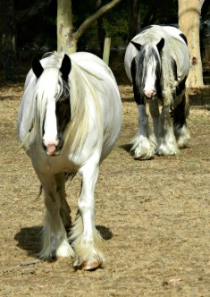 Our Neigh-neighbours