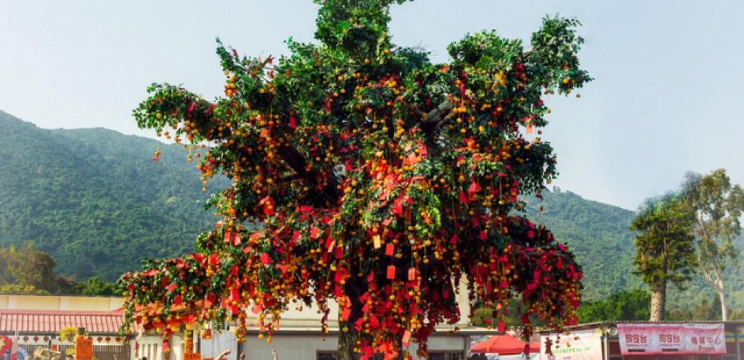 Photo of the Lam Tsuen Wishing Tree