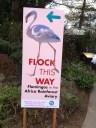 New exhibit of flamingos!
