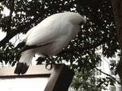 Birds looking at us...
