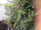 Random neighborhood with lovely foliage...