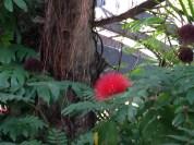 It looks like a Tarufulla plant, right?