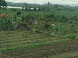 Rode bus from Nanning to Vietnam/Hanoi. Do you see the cemetary mixed in with the fields?