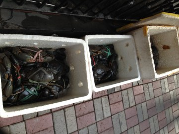 Walk with husband led us to crabs in a few boxes.