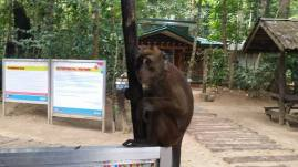 Monkeys- we were warned to have NO food at all, they will ignore us if we don't have any...