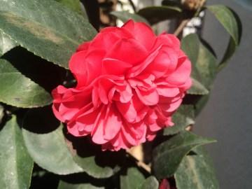Beautiful bloom...