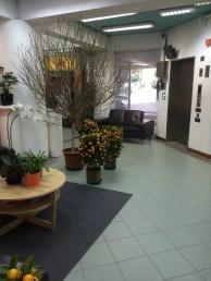 Blooming tree in school lobby, plus mandarin bushes...