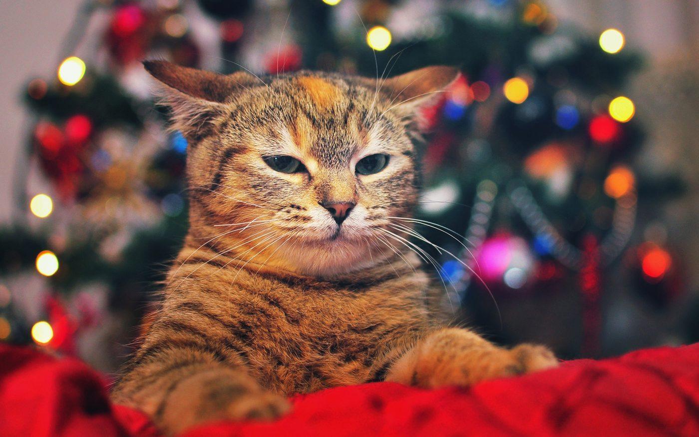 Alla fine, è piú triste Natale o Capodanno?