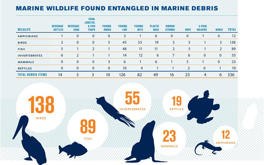 Tabella riportante alcuni animali marini trovati intrappolati in rifiuti marini, durante una campagna di Pulizia Internazionale delle Coste del settembre 2009