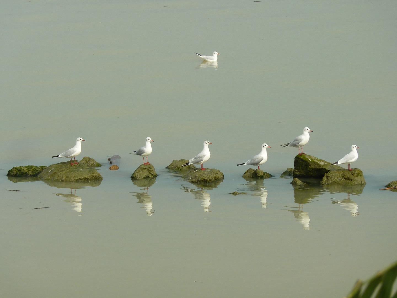Bracconaggio, cambiamento climatico, inquinamento: tutte le minacce al Delta del Po