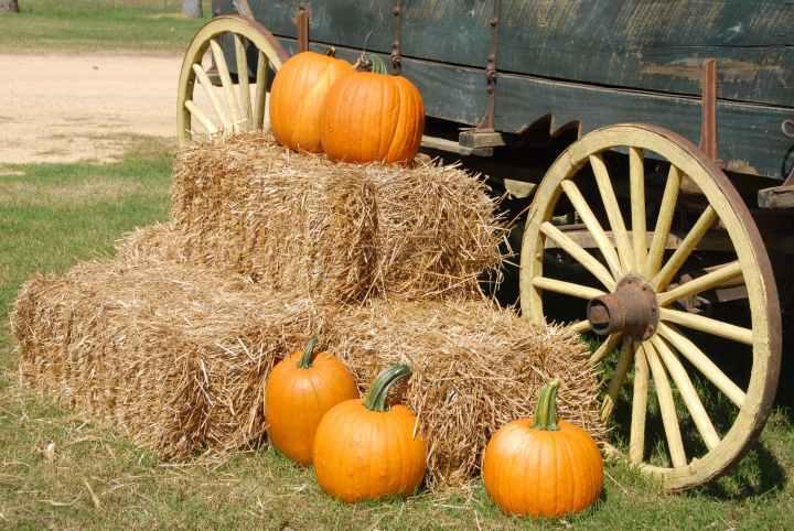 Your Guide to Pumpkin Patches, Corn Mazes & Fall Fun in Kitsap County