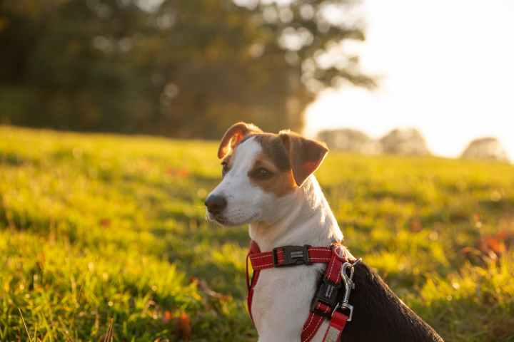 National Rescue Dog Day: What to Consider Before You Rescue a Dog