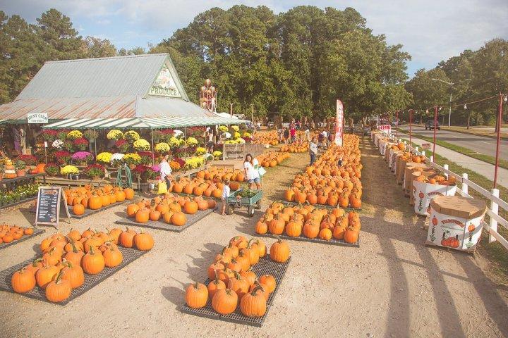 Pumpkin Picking & Oyster Roasting: 6 Fun Fall Activities in Hampton Roads