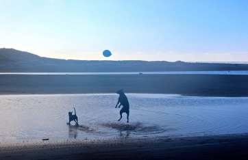 Dog and the blue balloon