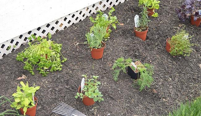 7 Tips for Starting Your Own Herb Garden | The Suburban Soapbox #herbgardening #OXOSpringGardening