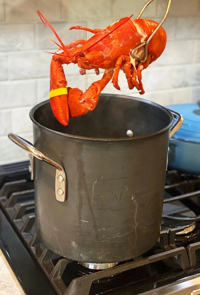 Cooked lobster being removed from a pot.