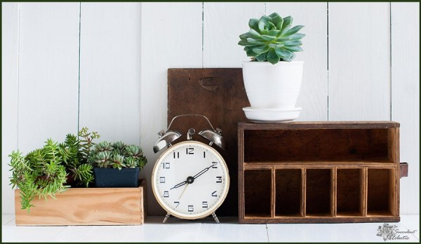 all about succulent houseplants
