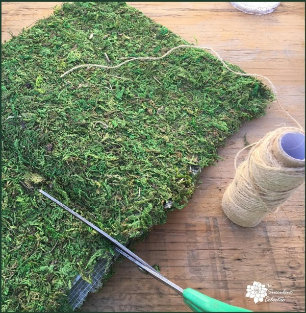 DIY succulent moss ball cutting the moss