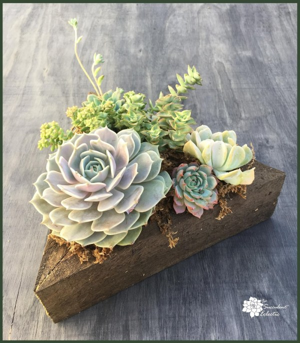 succulent box made of reclaimed wood filled with colorful succulents - for sale