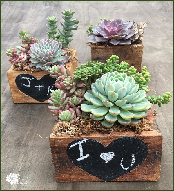 Valentine's Day DIY final reclaimed wood succulent planter with chalkboard heart blackboard paint